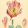 <strong>Dessin d'une <i>Tulipa gesneriana</i></strong>